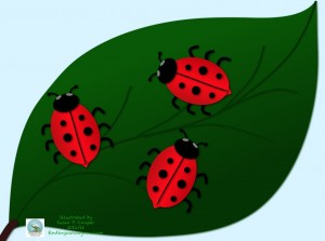 Big Lady Bugs