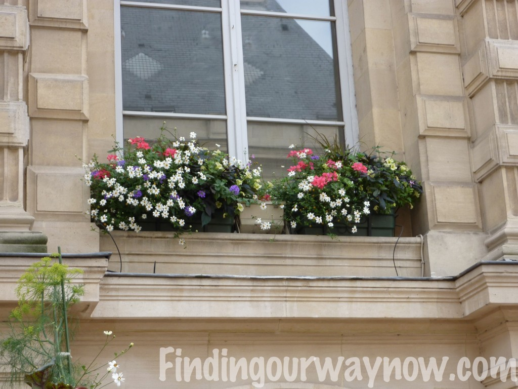 Flowers In France, findingourwaynow.com