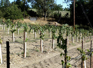 Holly's Hill Grenache, findingourwaynow.com