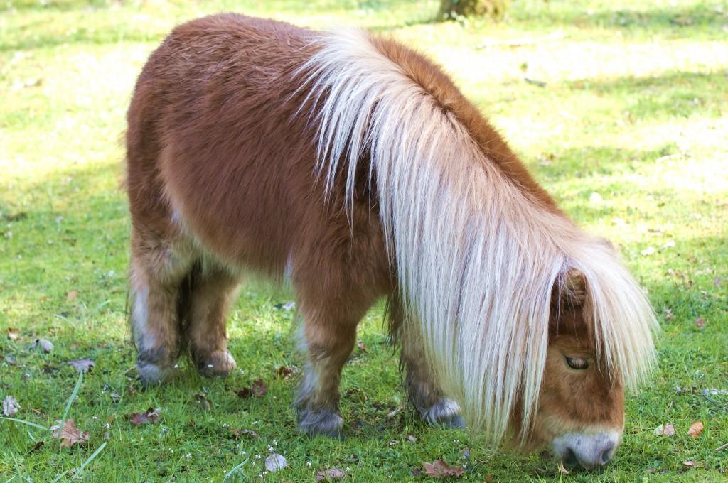 Lessons from A Shetland Pony Banjo, findingourwaynow.com