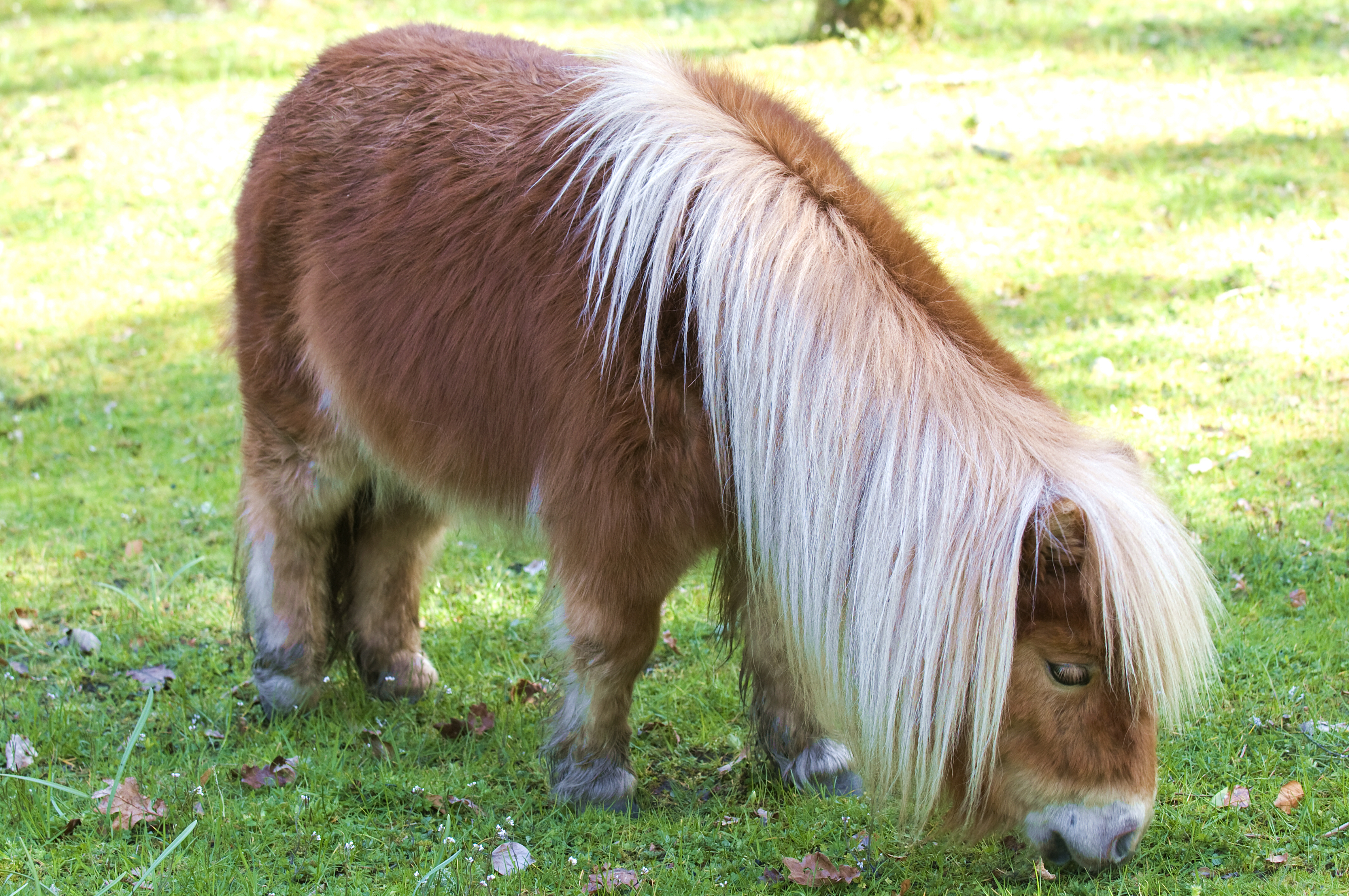 lessons from a shetland pony story finding our way now