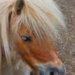 Lessons From A Shetland Pony: #Story