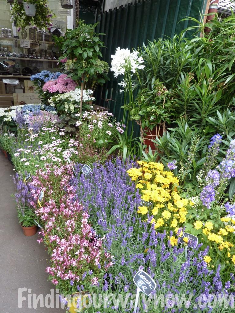 Flowers In France, findingourwaynow.com