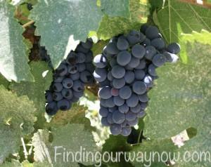 Mark West WInery Pinot Noir, findingourwaynow.com