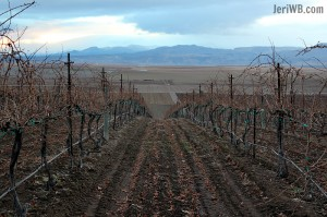 Idaho Wines Sawtooth Vineyard, findingourwaynow.com