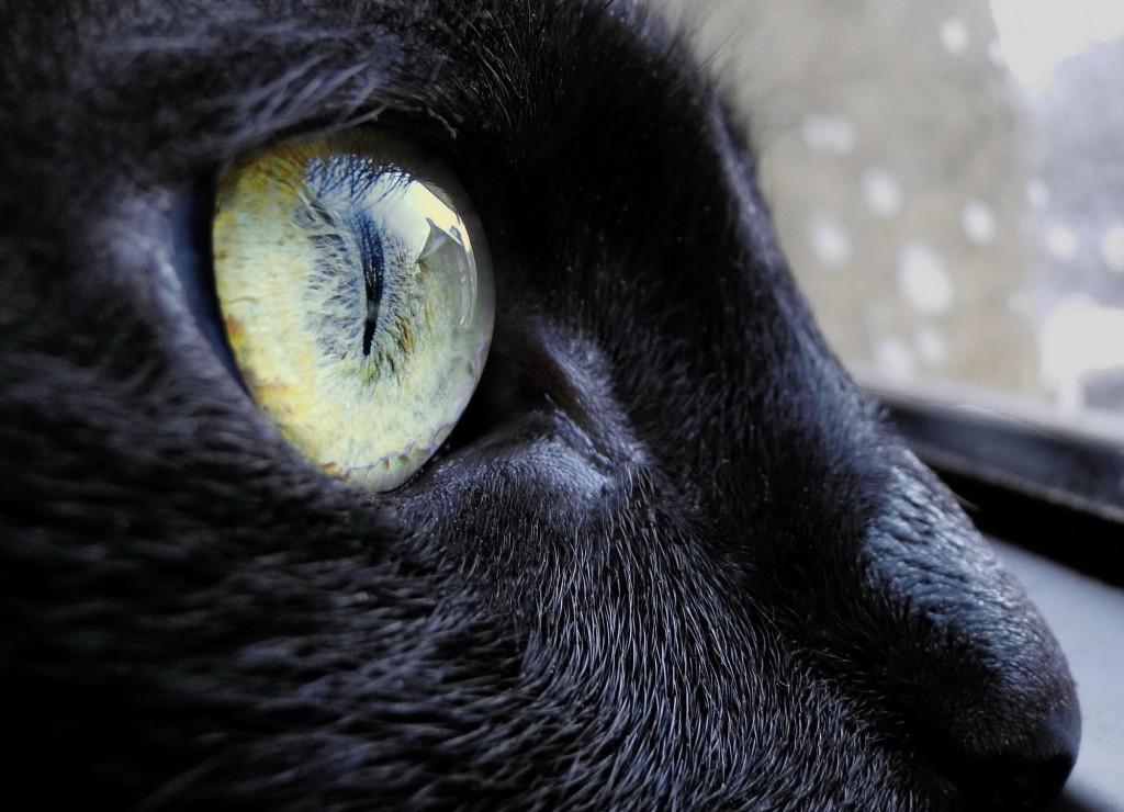 Kitty Catcher, findingourwaynow.com